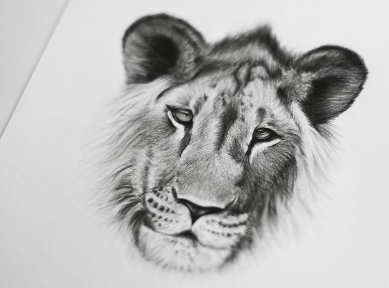 Kingdom Wear - Custom Illustrations
