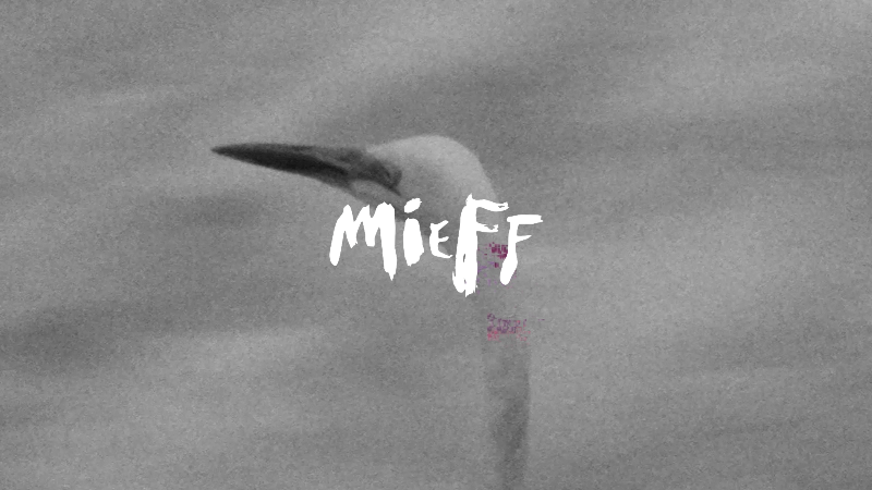 MIEFF FESTIVAL 2017