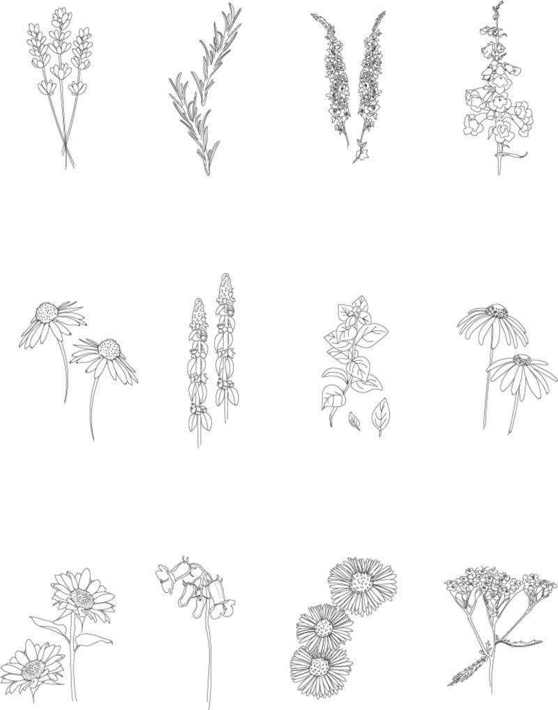 Digital Flower Illustration