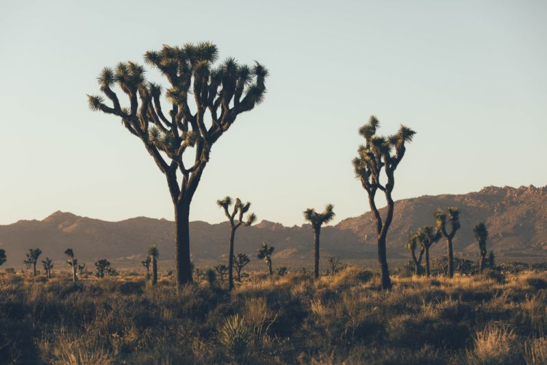 24 hours in Joshua Tree - California