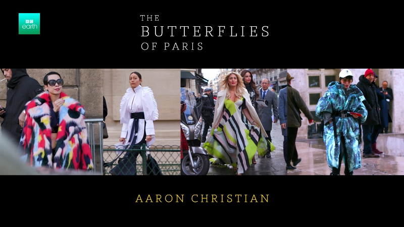 W Magazine: The Butterflies Of Paris