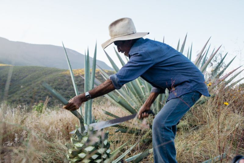 A Glimpse into How Mezcal, Mexico's Most Prized Liquor is Made