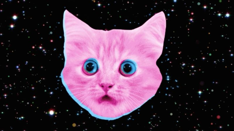 DfT | Pink Kittens