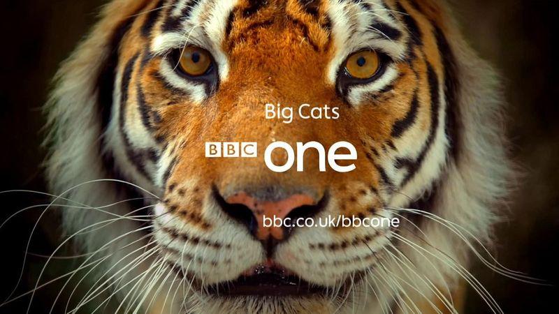 Big Cats BBC One