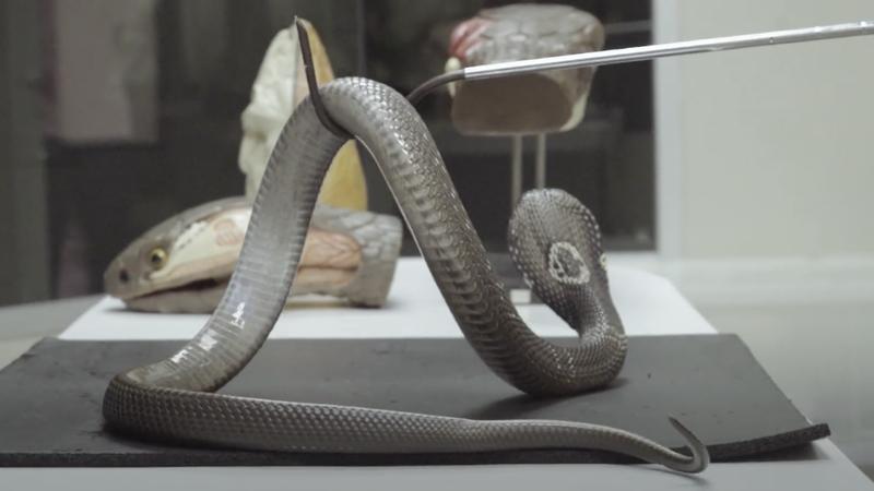 Slither into Bangkok's Snake Farm