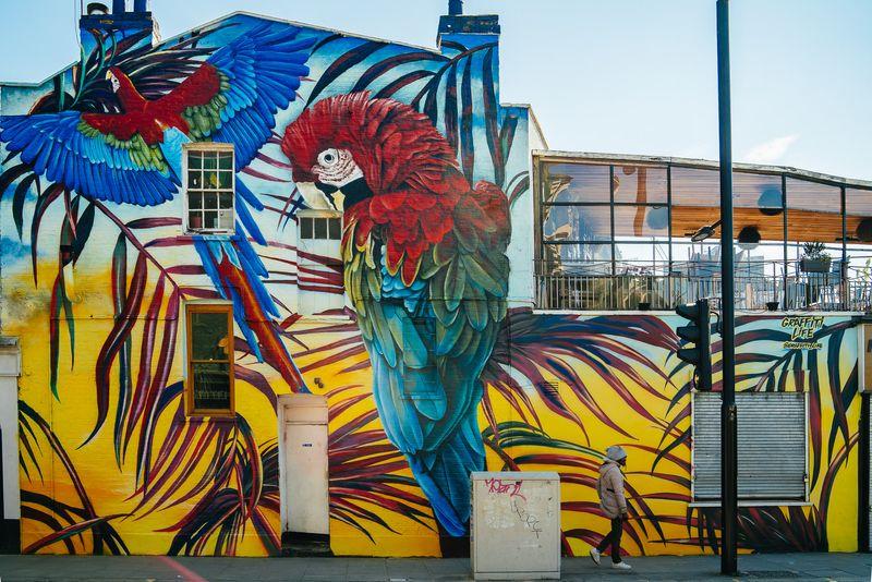 Giant Parrots in Camden