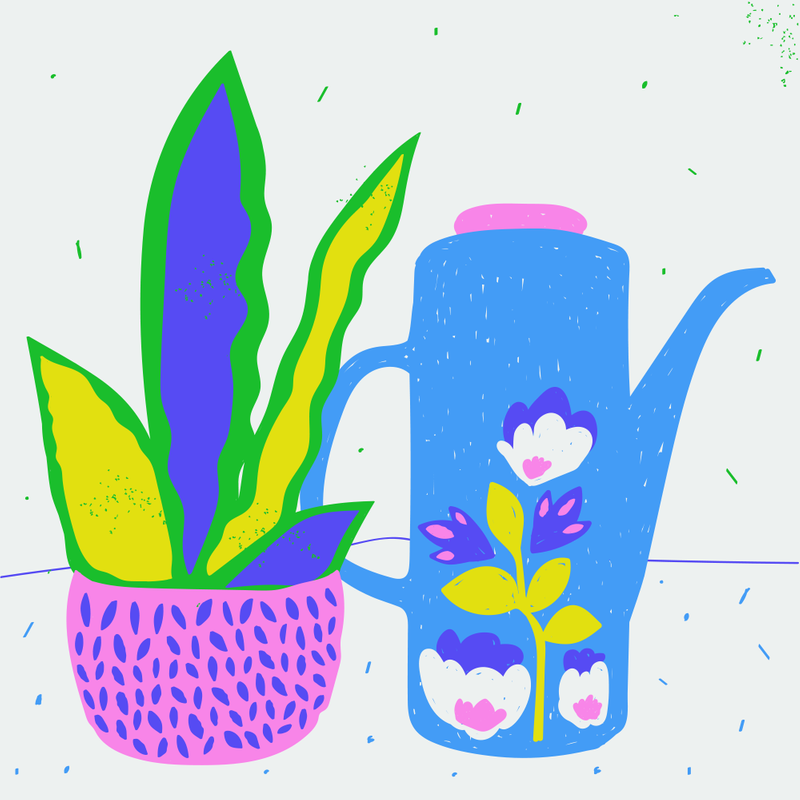 Coffee and plants