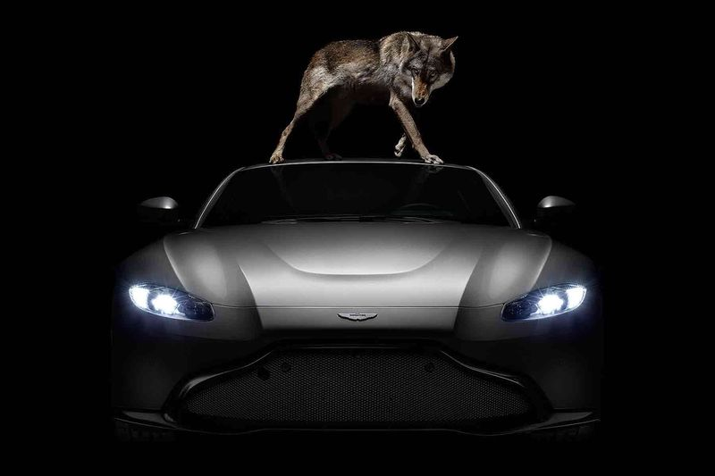 Aston Martin: Beautiful Won't Be Tamed