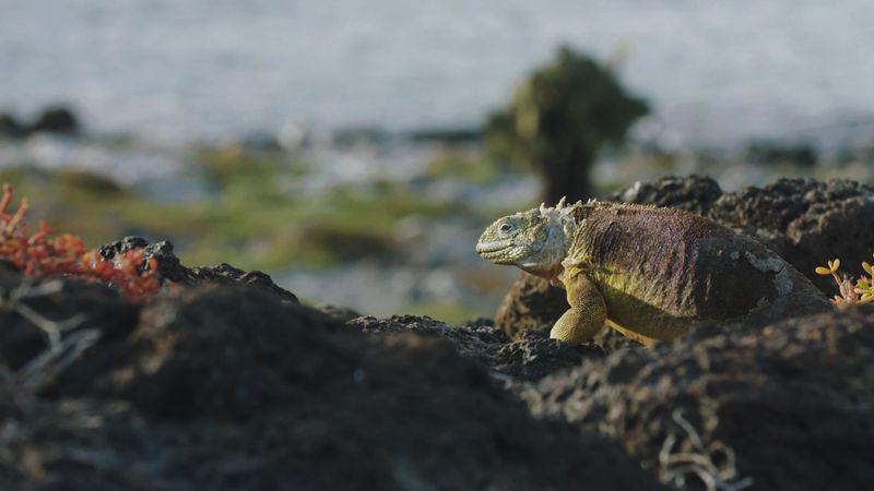 Cazenove and Loyd : Galapagos