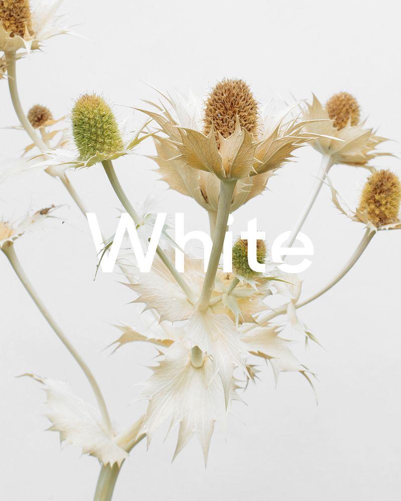 Floom Inline Category Design