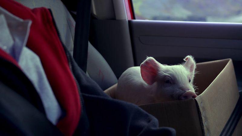 Vodafone 'Piggy Sue'