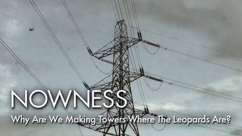 'Why Are We Making Towers Where The Leopards Are?' - Oliver Endersby | NOWNESS x ICA