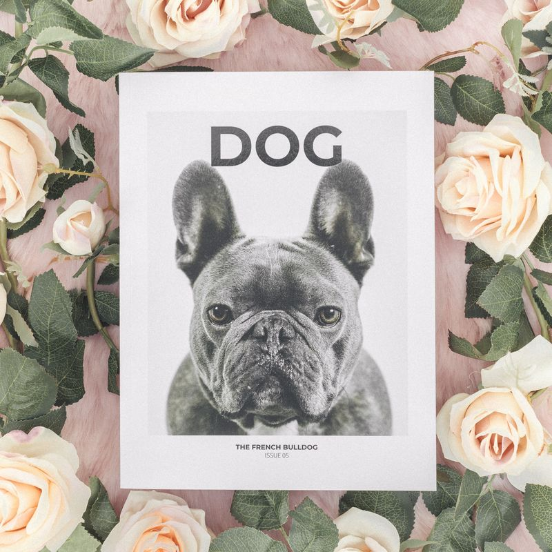 ISSUE 5 - THE FRENCH BULLDOG