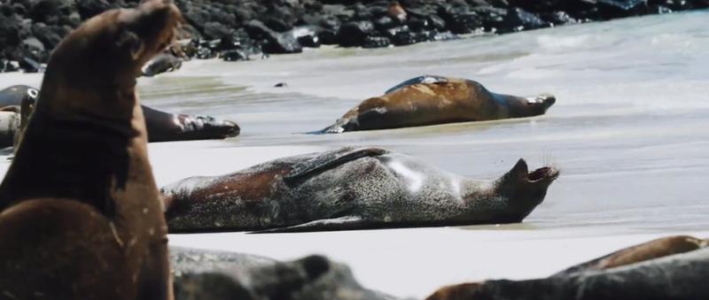cazenove+loyd - Experience Ecuador and the Galapagos Islands