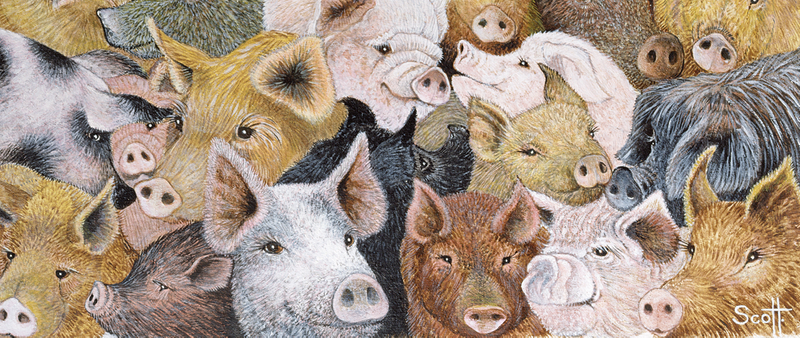 Chinese New Year 2019: The Pig