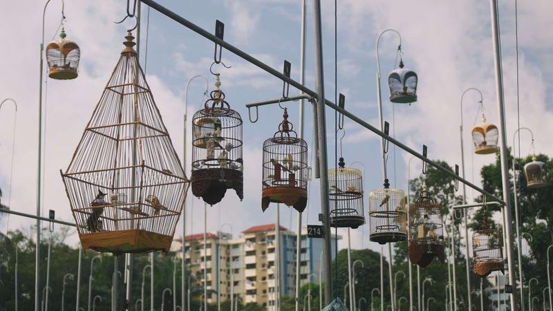 The Last Bird-Singing Clubs of Singapore