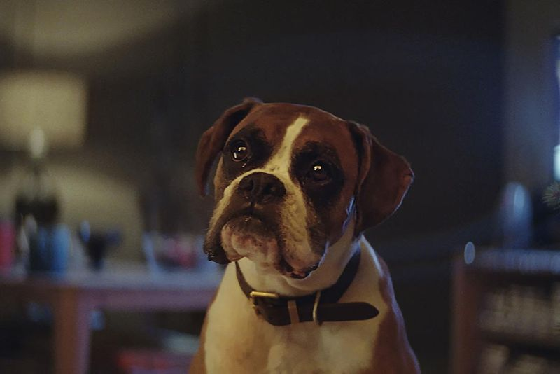 John Lewis Christmas:  Buster the Boxer