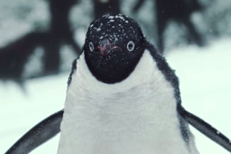 John Lewis Christmas: Monty the Penguin