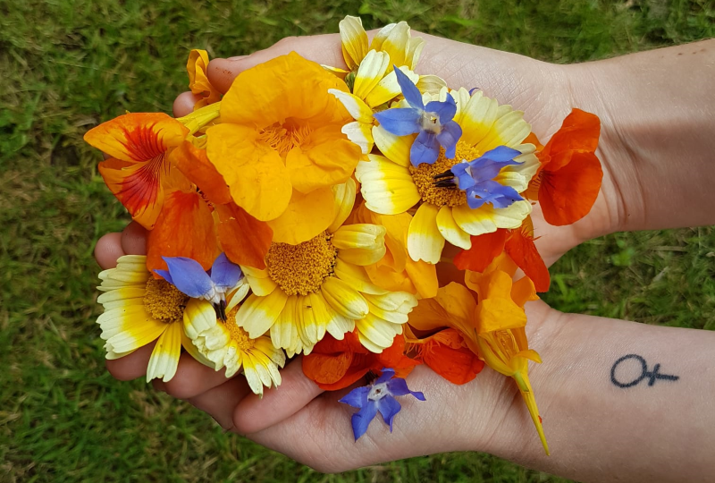 Beginner's Guide To Foraging Edible Flowers, Plants And Mushrooms