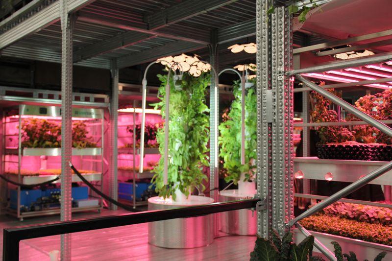 Ikea & Tom Dixon instillation at Chelsea Flower show 2019
