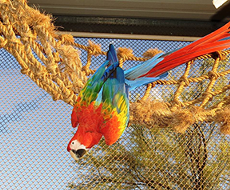 Inventor of the world famous StarBird Parrot Get a Grip exercising net