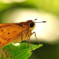Bugs Plus Pest Control logo