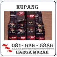 Agen Resmi { 082121380048 } Jual Obat Bentrap Di Kupang logo