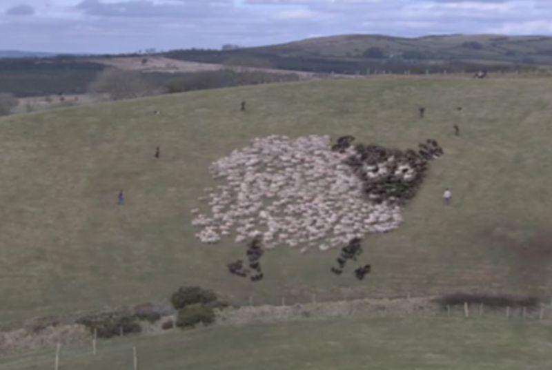 Samsung LED Sheep
