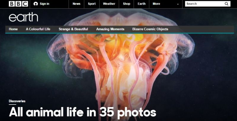 Internet or Die Interview: Matt Walker, Editor, BBC Earth