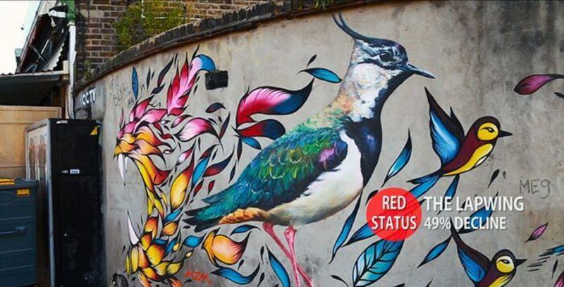 Lizzie Tilley - Street Birds