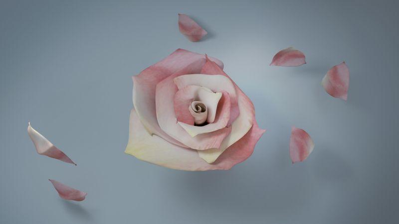 Roses - Sarah Ho London
