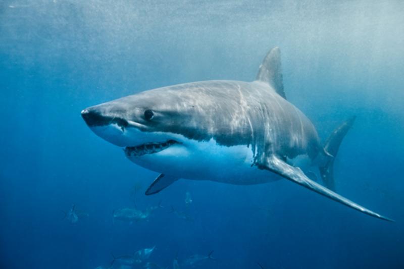 The Countdown to Shark Week Begins...