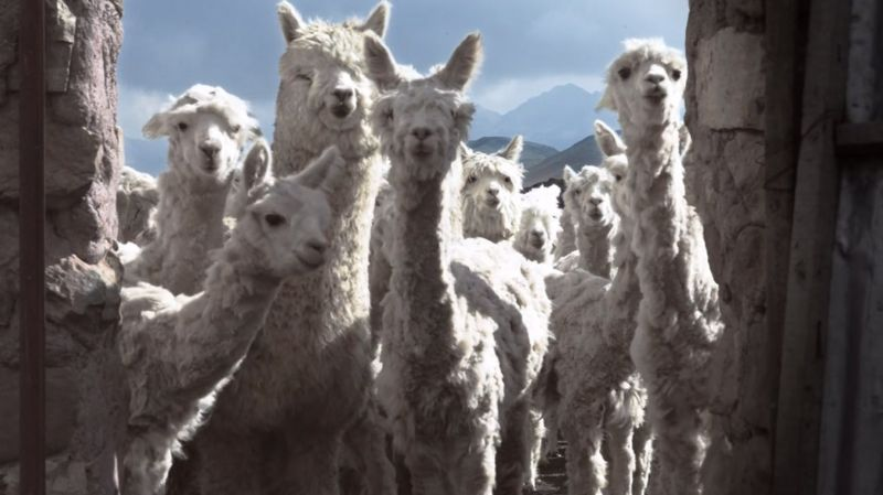 Our Wool
