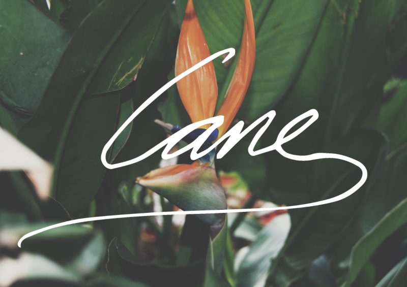 CANE Archive 01