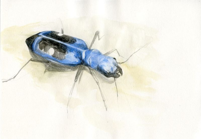 Buzz Hoot Roar insect illustrations
