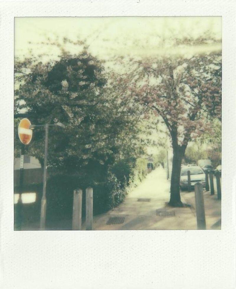 Synesthetic Memories - Polaroids