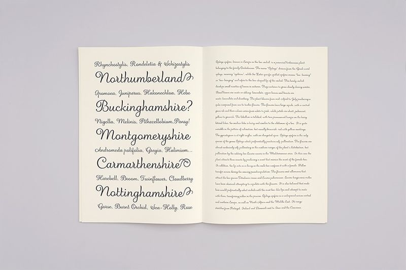 Albi Typeface