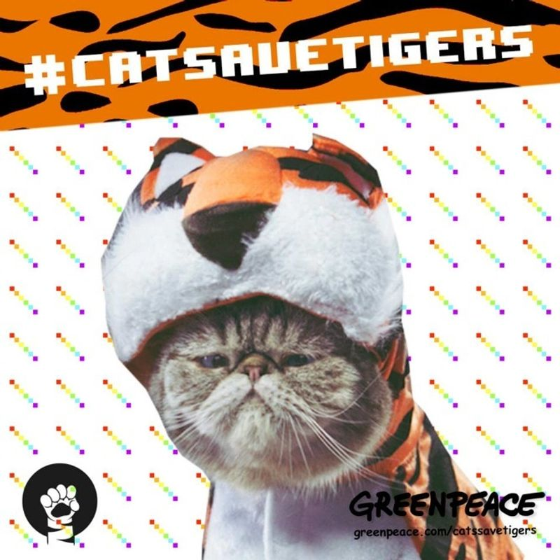 Cats Save Tigers for Greenpeace