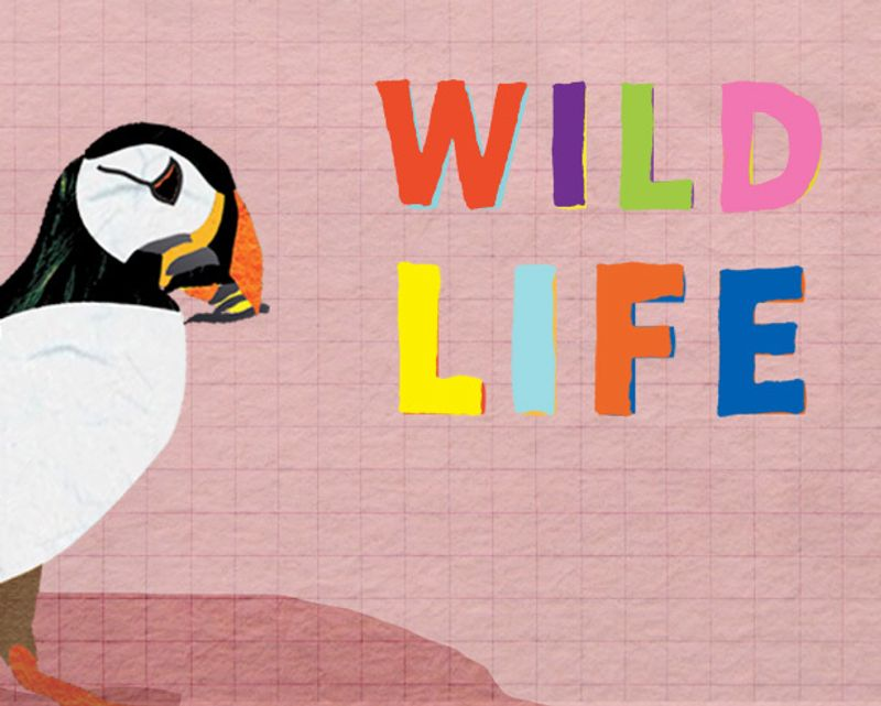 Wildlife Website for Children