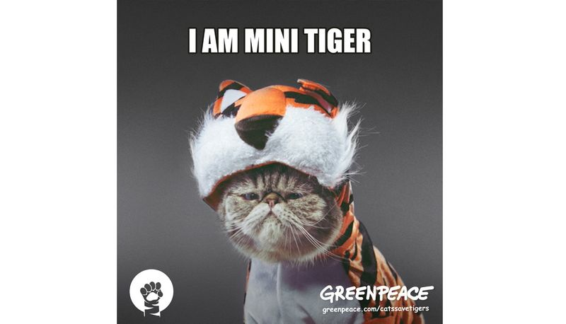 Greenpeace: Cats Save Tigers
